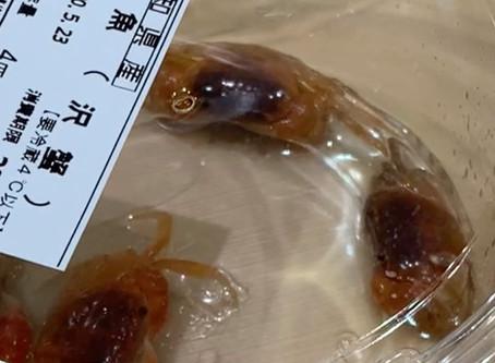 """スーパーに 衝撃の鮮魚 """"さわがに""""  ペットOK ???!"""