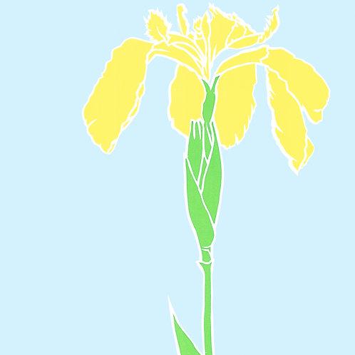 'Iris' Limited edition, handmade silkscreen print