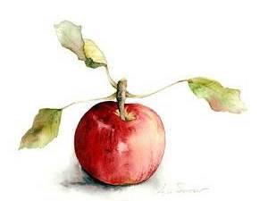 Apple- Watercolor
