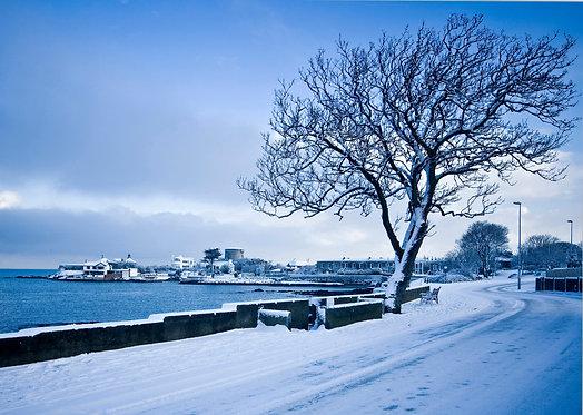 Sandycove Snow