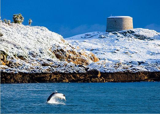 Dalkey Island Dolphin, Dalkey, Dublin