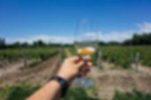 Wine_Vineyard_TGW[1].jpg