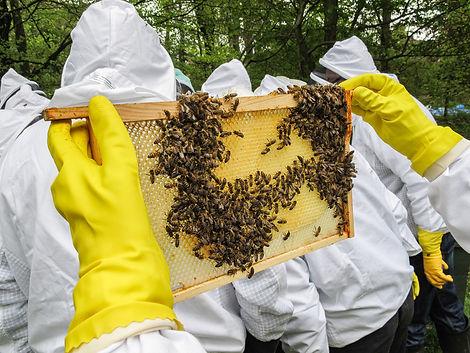 Beekeeping-web.jpg