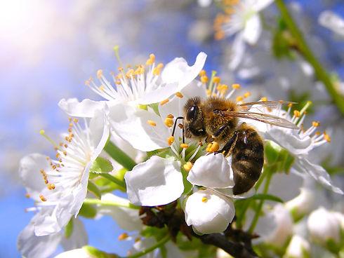 bee-on-flower-web-1.jpg