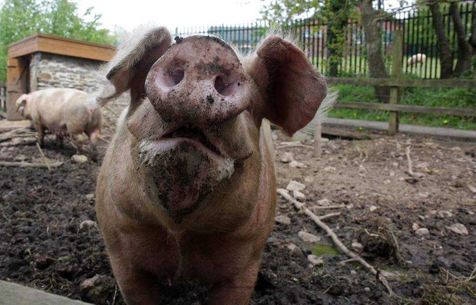 Pig Monster.jpg
