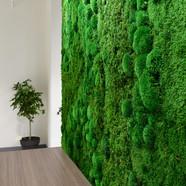Moss Wall2.jpg