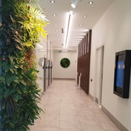 Dream Moss Wall.jpg