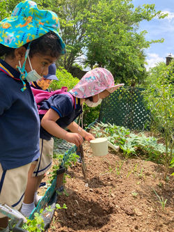 Outdoor Learning at the Allotment