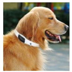 Dog GPS Tracker Knight S1 Buckle Fasting
