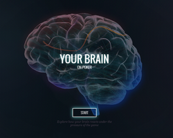 Your Brain on Poker