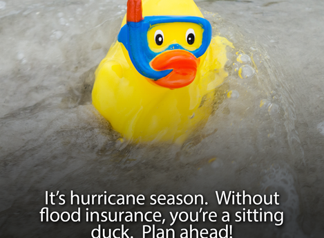 It's Hurricane Season - Don't Be A Sitting Duck