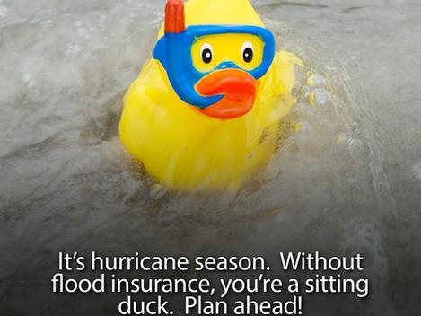 It's Hurricane Season - Don't Be A Sitting Duck