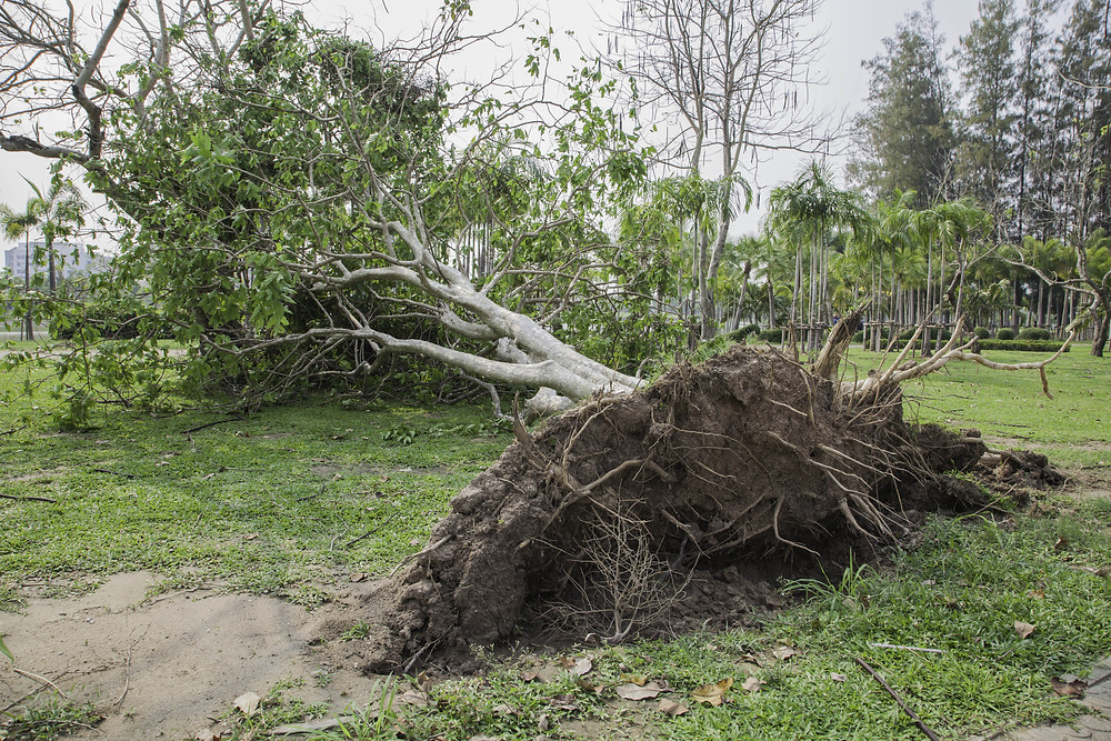 Storm Peace covers costs to remove fallen trees after a hurricane