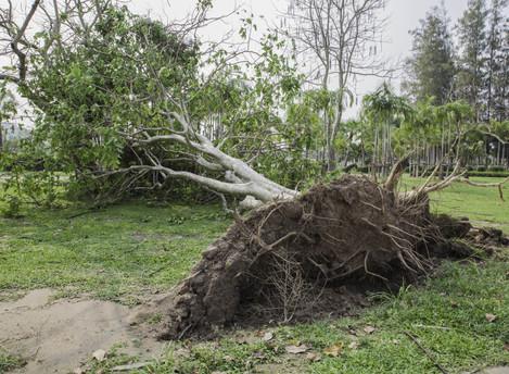 StormPeace - Extra Hurricane Insurance
