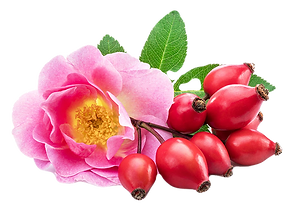 Rose-Hips-for-way_edited.png