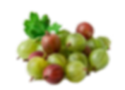 Gooseberry-for-way_edited.png