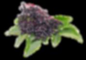 Elderberry-foe-way_edited.png