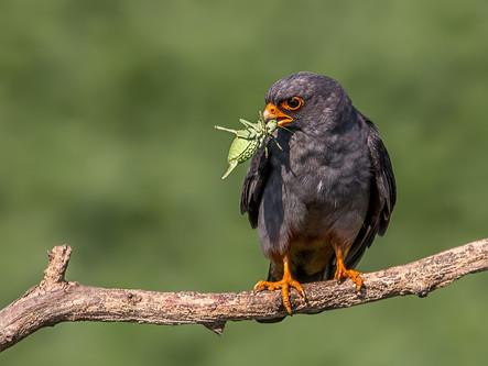 Event Birds: When seeking a rare bird becomes an obsession