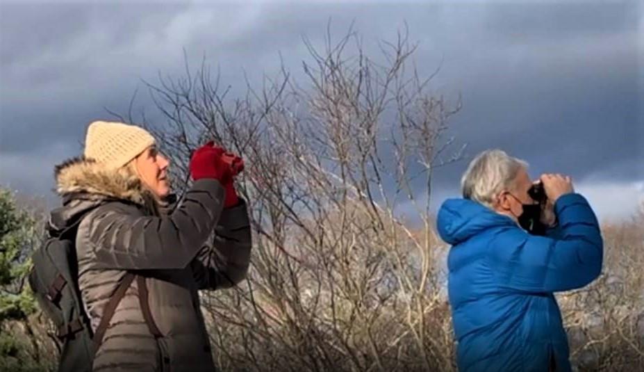 Bird watching New England