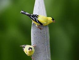 Thistle Sock Bird Feeder.jpg