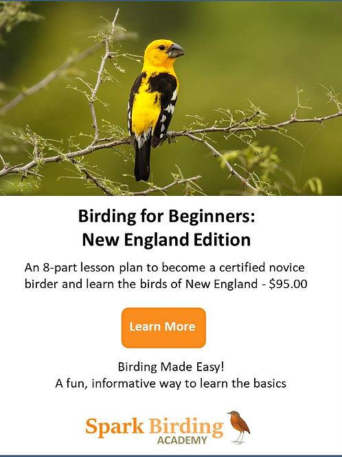 Birding for Beginners: New England Edition