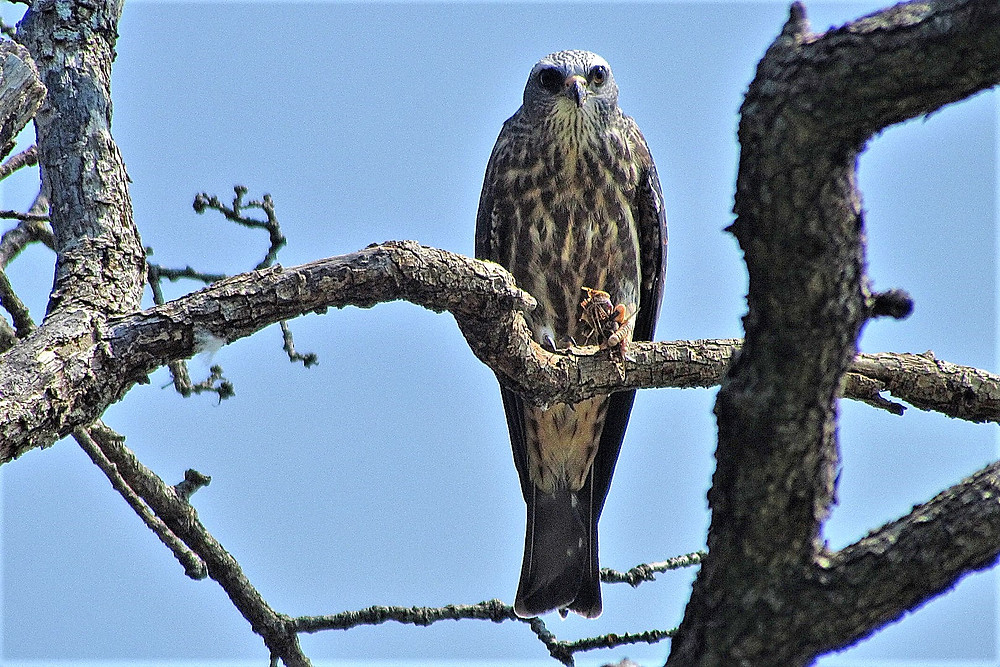 Birding in New England