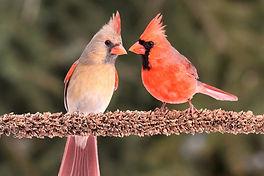 Birding Stories