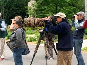 A Taste of a Bird Walk: Mt. Auburn sightings from May 15 & May 18, 2021