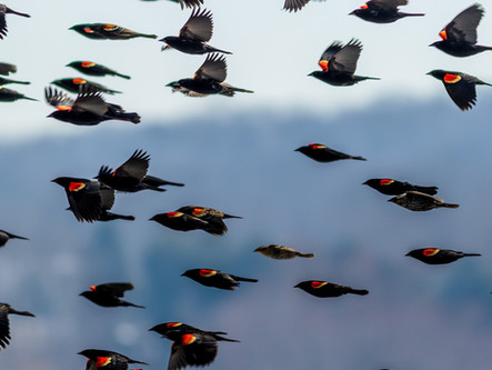 New Course: Spring Migration in New England