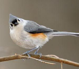 Bird watching Tips