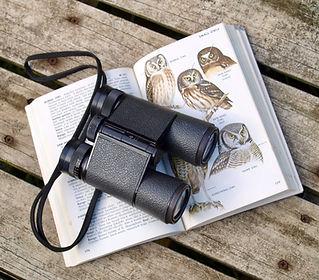 Birding News & Articles