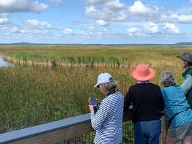 Plum Island Birdwatching Excursion
