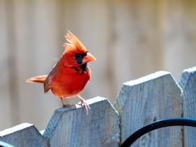 Backyard Birding: Top Tips for Fall