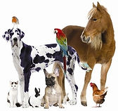 healhy, happy, balanced pet, animal, cat, dog, horse, bird, guinea pig, rabbit, chicken