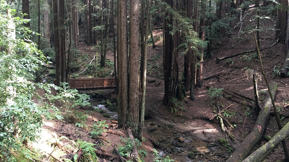 Redwood Riding