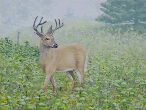 Misty Morning Deer