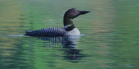 Early Morning Loon