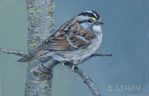 White-throated Sparrow 2020