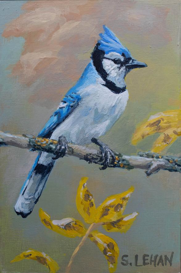 Blue Jay 2021