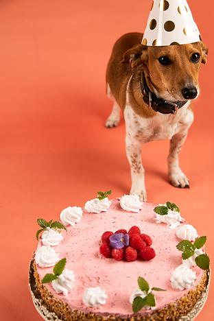 Happy_dog_day_simone_fuchs.png