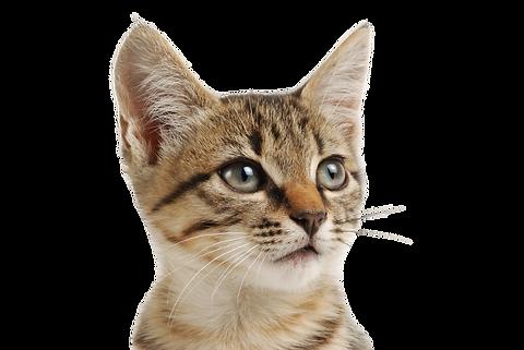 Calitamex - Veterinäres Pflegeöl für Hunde und Katzen