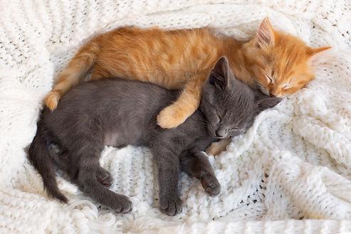 two-cute-tabby-kittens-sleeping-hugging-