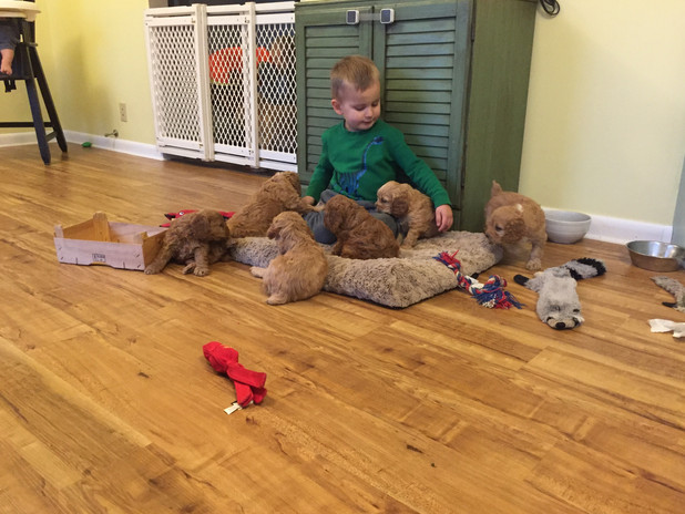 Drew loves playtime in the kitchen with the pups (Starla 2018).