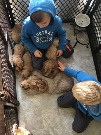 Drew and Reid often climb in to hold, snuggle & play with the pups.