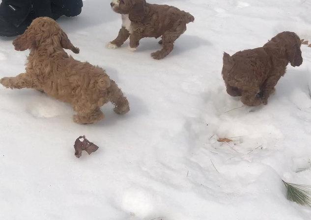 Pups at play💙