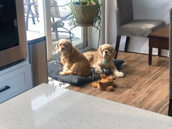 My audience while I work in the kitchen. 😊 Eevee and Madi were enjoying the sunshine coming in our dining room door on the cold winter day.