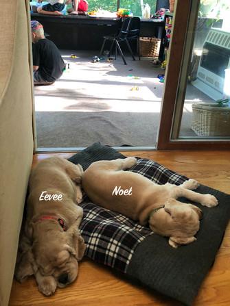 Eevee and Noel
