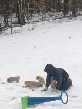 Puppy sledding 🙃