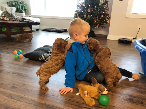 The pups and Reid were enjoying some playtime and snuggles in the living room. (Apple's pups with Reid).