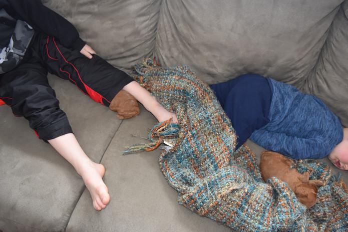 Naptime with pups. (Malbec & Syrah - Madi 2017).